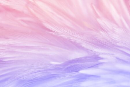 Fluffy Pink or pastel bird feathers in soft and blur for background and art design