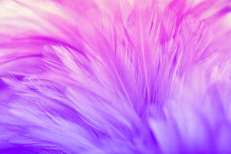 Pastel colored of chicken feathers in soft and blur style