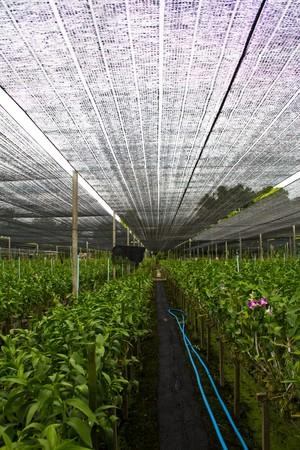orchid farm 5 Stock Photo