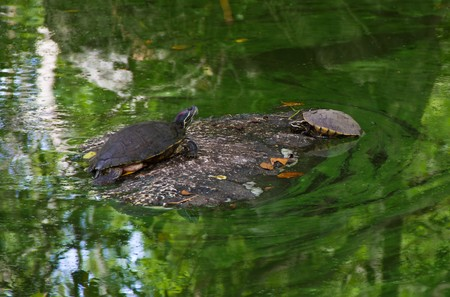 turtle in garden Stock Photo - 7419327