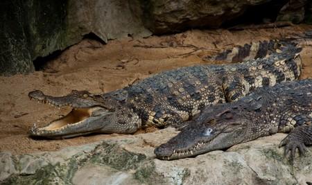crocodile Stock Photo - 8012015