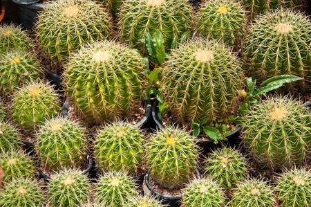Cactus Stock Photo - 12816725