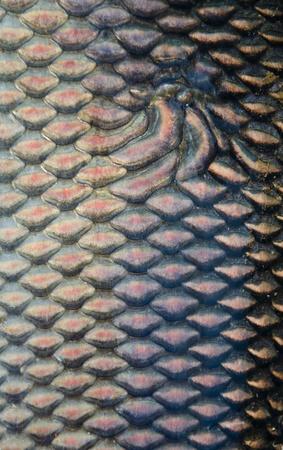fish skins photo