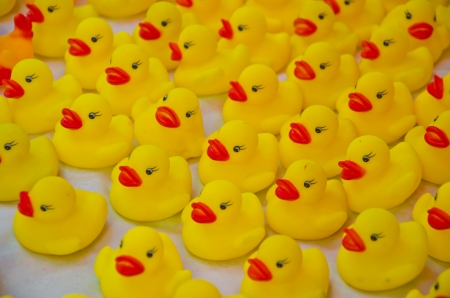 duck toy Stock Photo