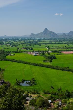 mountain view: mountain view farm rice