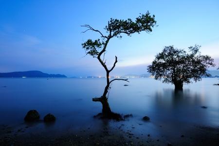 mangrove in twilight