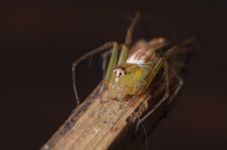 wood spider: spider on wood Stock Photo