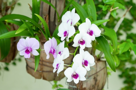 white and purple orchid in garden
