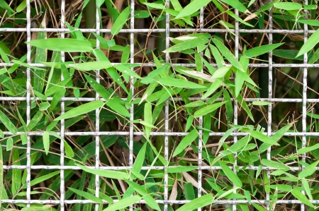 wire mesh steel with bamboo leaf fence Stock Photo - 15950121