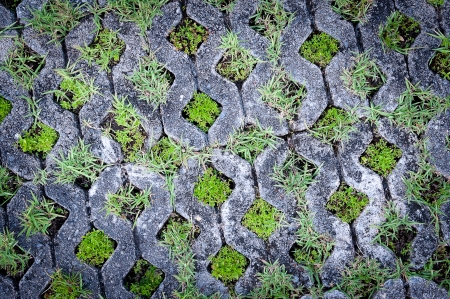 old grass block cement walk path with grass pattern Stock Photo - 16193144