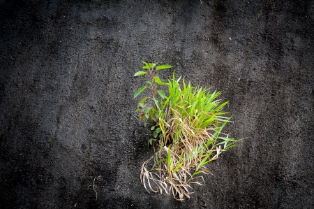 grass live on concrete wall