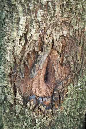 A hole on Tree bark Stock Photo - 16547725