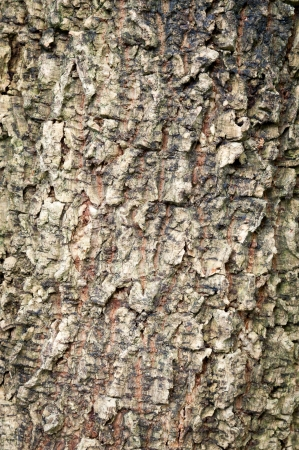 old tree bark texture Stock Photo - 16623682