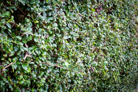 plant background Stock Photo - 16739555
