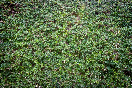 plant background Stock Photo - 16739747