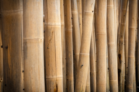 Bamboo barrier for protect the beach, phuket Thailand Stock Photo - 16739881