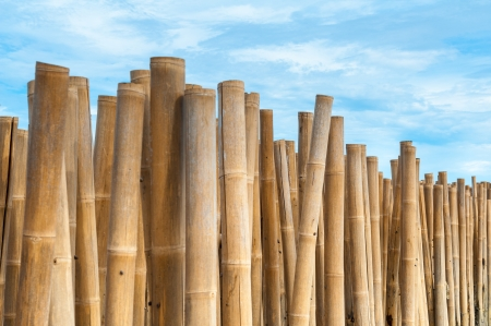 Bamboo barrier for protect the beach, phuket Thailand Stock Photo - 16739973