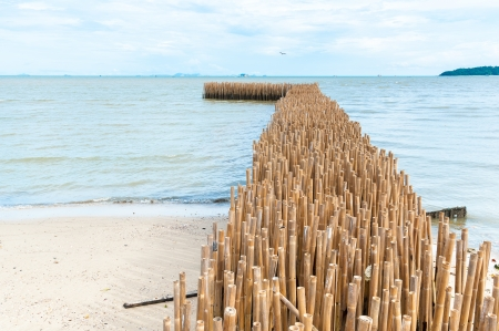 Bamboo barrier for protect the beach, phuket Thailand Stock Photo - 16739766