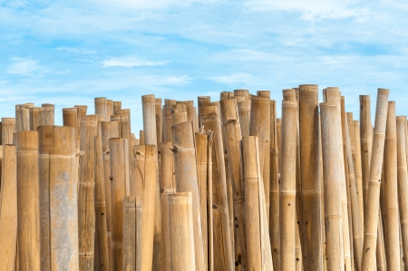 Bamboo barrier for protect the beach, phuket Thailand photo