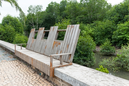 walkway and bench in front of mangrove forest photo