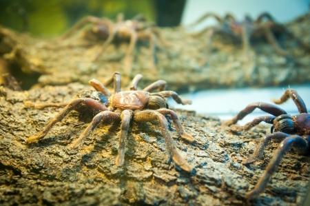 flauna: spider on wood Stock Photo