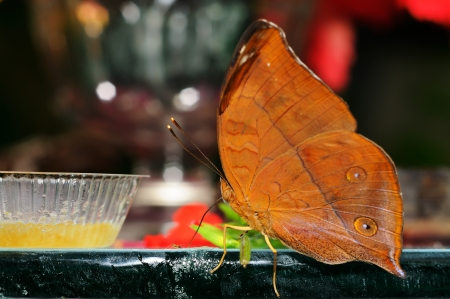 A beautiful butterfly eating food Stock Photo - 17071025
