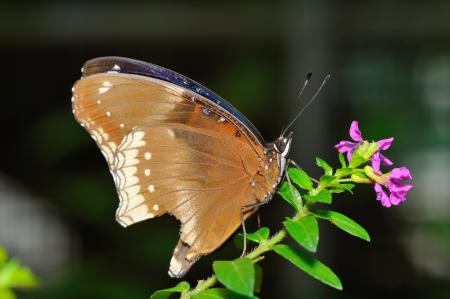 A beautiful butterfly sitting in the tree Stock Photo - 16974680