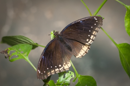 A beautiful butterfly sitting in the tree Stock Photo - 16974690