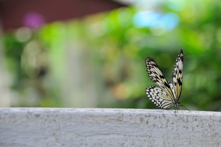 A beautiful butterfly sitting  Stock Photo - 17105696