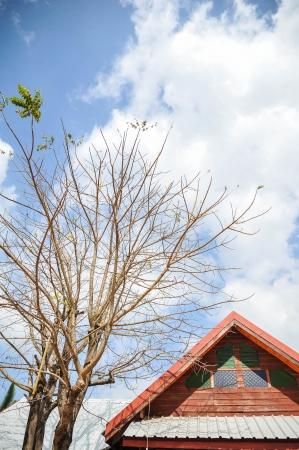 albero secco: timpano tetto con albero secco