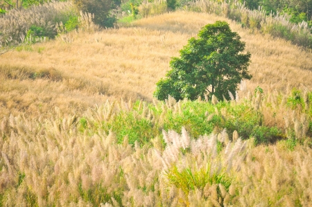 Lonely tree on the grass land on hill photo