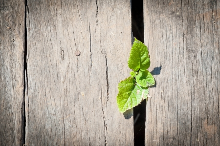 small plant growing below wood deck