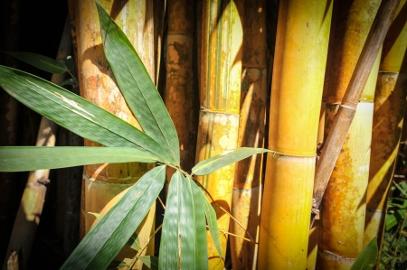 Yellow bamboo background Stock Photo - 17353786