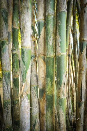 light green bamboo Stock Photo - 17353791