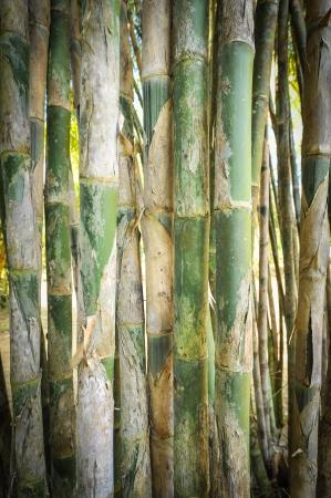 light green bamboo Stock Photo - 17353791
