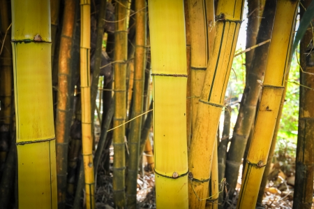 Yellow bamboo background Stock Photo - 17353778