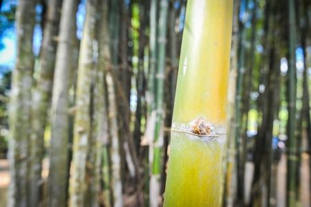 light green bamboo Stock Photo - 17353772