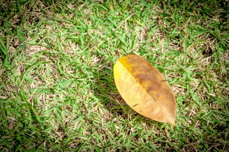 Dry leaf on a grass Stock Photo - 17595202