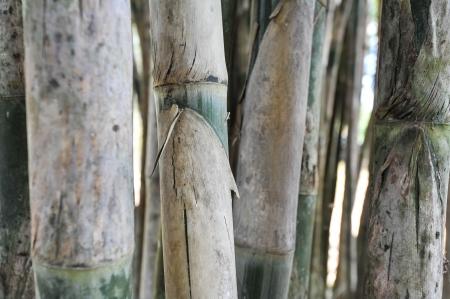light green bamboo background Stock Photo - 17756803