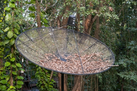 old satellite dish in the garden with dried leaves inside Stock Photo - 17756846