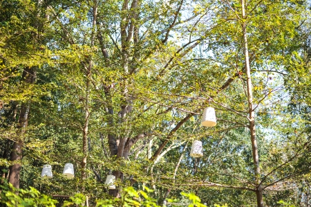 lamps on the tree photo