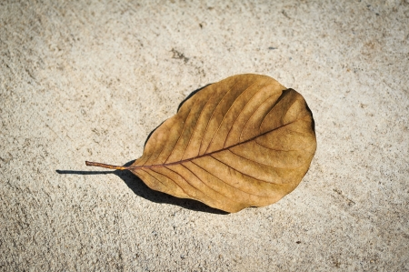 dry leafs on cement pavement