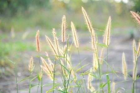 grass pollen on field Stock Photo - 18002779