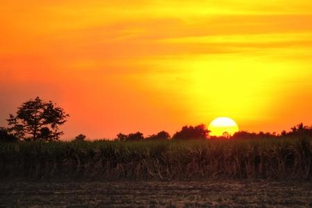 nice sunset over cane farmland, Thailand photo