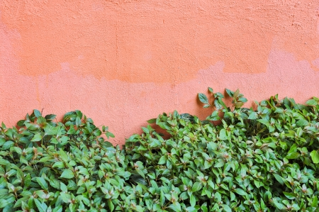green leaves on beige wall photo