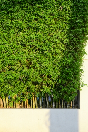 planter of bamboo for fencing photo