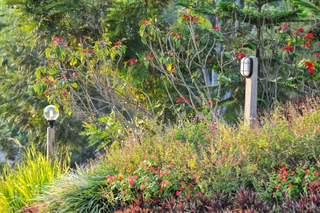 lamp in garden  photo