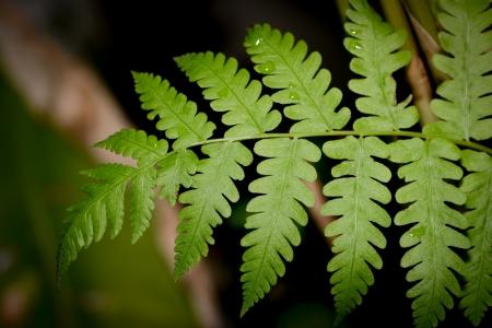 Rainforest fern, Fern leaf  Stock Photo - 18575033