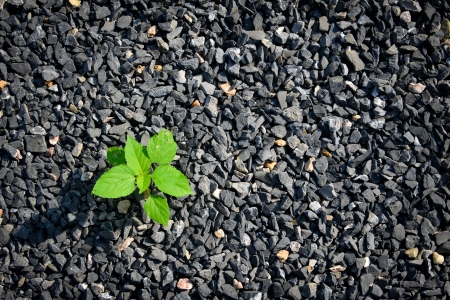 small plant growing on black gravels  Stock Photo