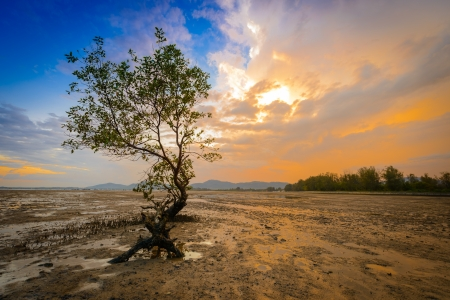 mangrove in sunset, twilight time, phuket Thailand  Stock Photo
